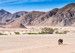 hoanib valley view elephant