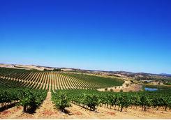 vineyard alentejo