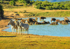 Wildlife Port Elizabeth