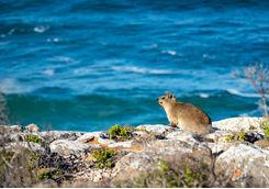 Wildlife Plettenburg Bay