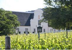 Vineyard South Africa