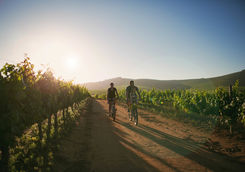 Family ride winelands