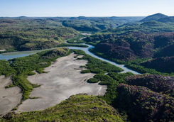 Aerial view mangrove