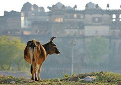 ox orcha palace
