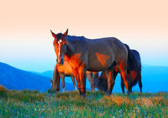 Horses in Andalucia