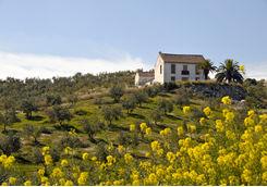 Luxury finca in Spain