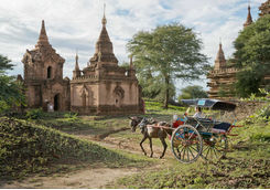 Horse and cart in Bagan