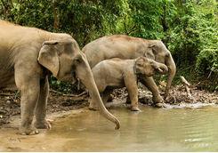 Elephants bathing in a pool