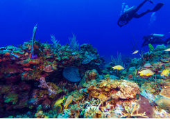 Caribbean reef diving