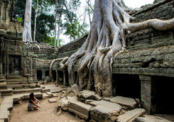 big roots from angkor inside the ta prom temple