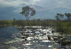 Okavango Delta swamp