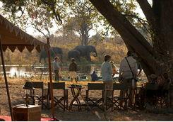 Selinda Explorers elephants