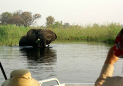 Seeing an elephant in the river from a boat