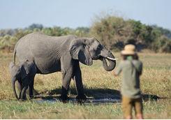 Wildlife photographer and an elephant