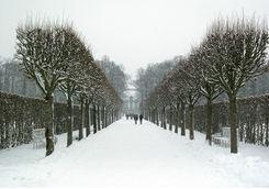 tree alley under snow