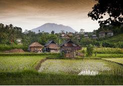 bali village