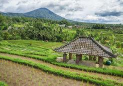 bali countryside