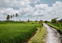 rice paddies road