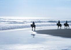 bali horseback