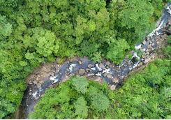 river running through rainforest