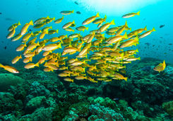 underwater with colourful fish