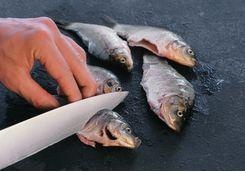 man makes cuts on carp fish