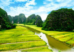 Rice field and river in Ninh Binh