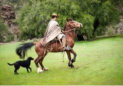 profile of cowboy riding a horse