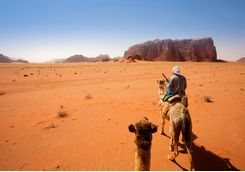 camel trek in the desert
