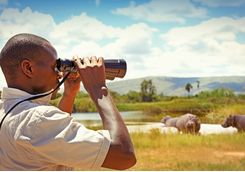 man with binoculars watching wild animals
