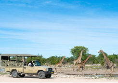 Game drive at Onguma