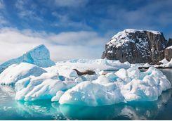 weddell seals rest on an iceberg
