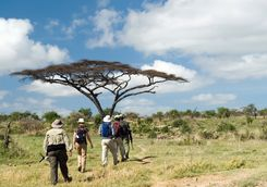 Group of people on walking safari