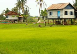 rice paddles and traditional houses