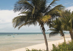 Beach of Vilanculos with palm trees