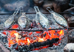 Grilling fish on campfire