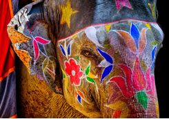 Painted elephant in Jaipur