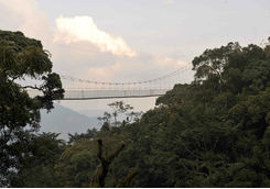 Nyungwe National Park tree canopy walkway