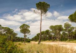 Sandy road in Donana National Park