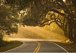 Road in Savannah