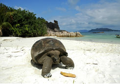 Giant tortoise on the beach