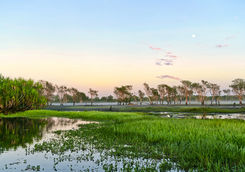 Sunrise over the yellow water billabong in Kakadu National Park