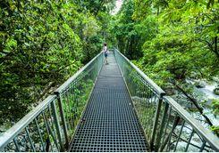 Bridge in the Daintree rainforest