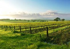 Barossa Valley vineyards