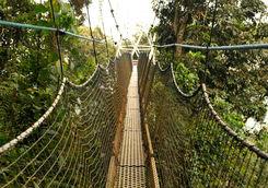 Nyungwe Canopy Walkway