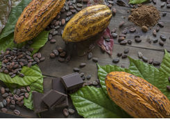 Cacao Bean and Chocolate