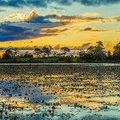 The Pantanal wetlands