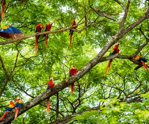 Parrots in trees