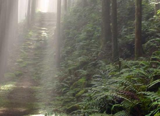 Koyasan forest