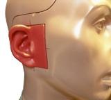 head-ear